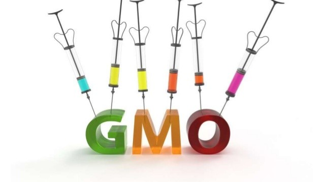 Top 5 Genetically Modified Organisms (GMOs)