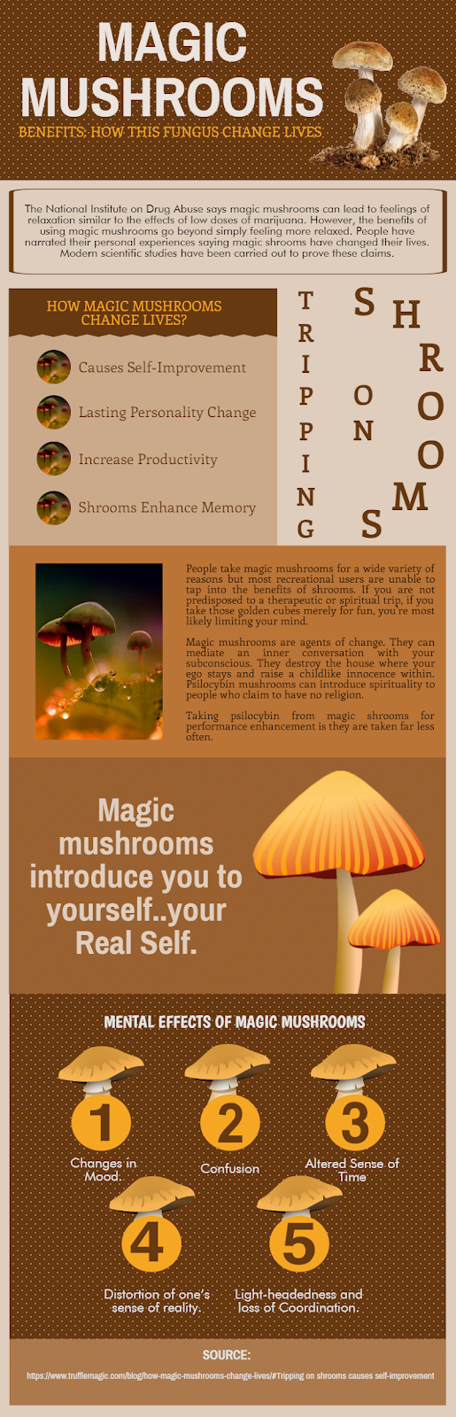 How Magic Mushrooms Changes Lives?