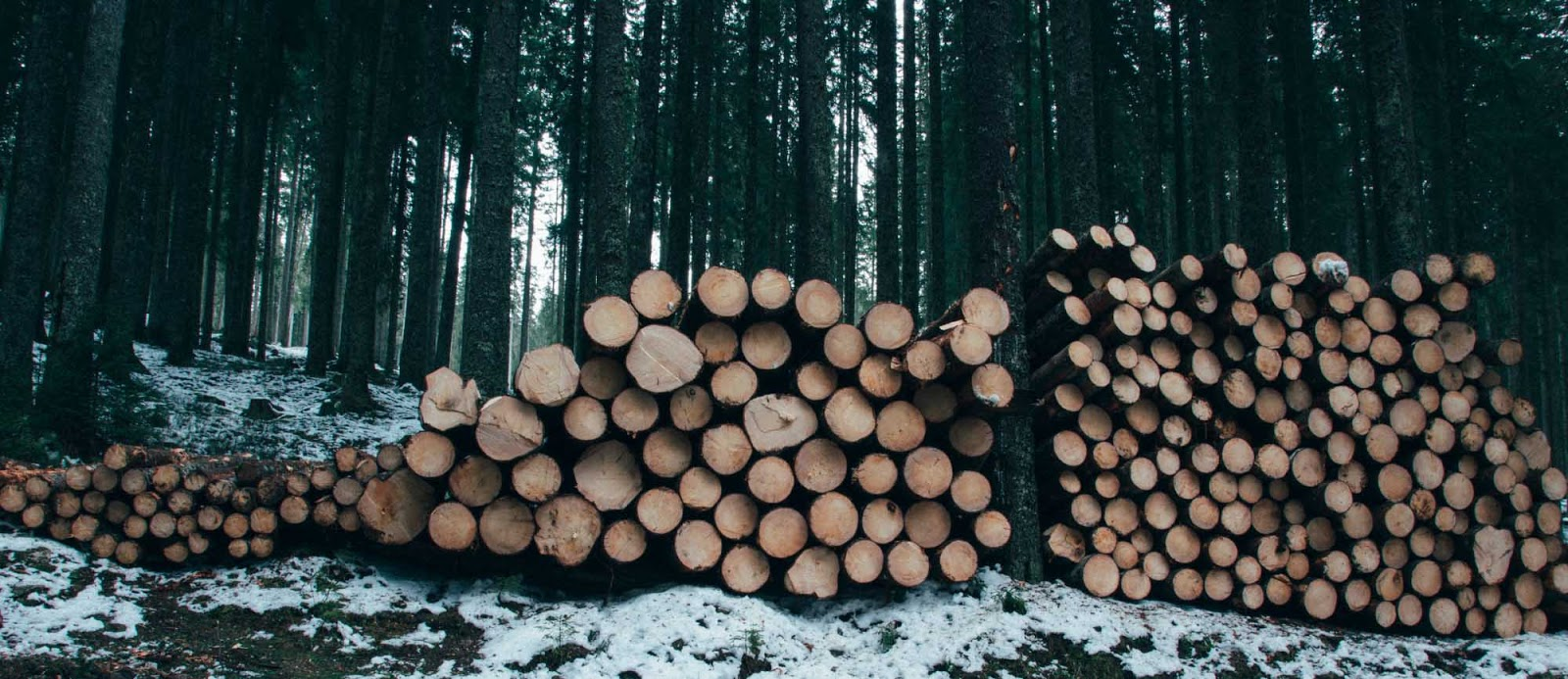 Hardwood Logs For Sale: How To Buy Firewood Logs For Long-Lasting Fires