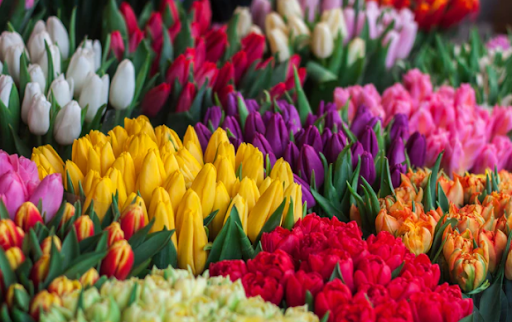 HOW FLOWERS ARE THE EXPERTS IN EXPRESSING YOUR EMOTIONS?